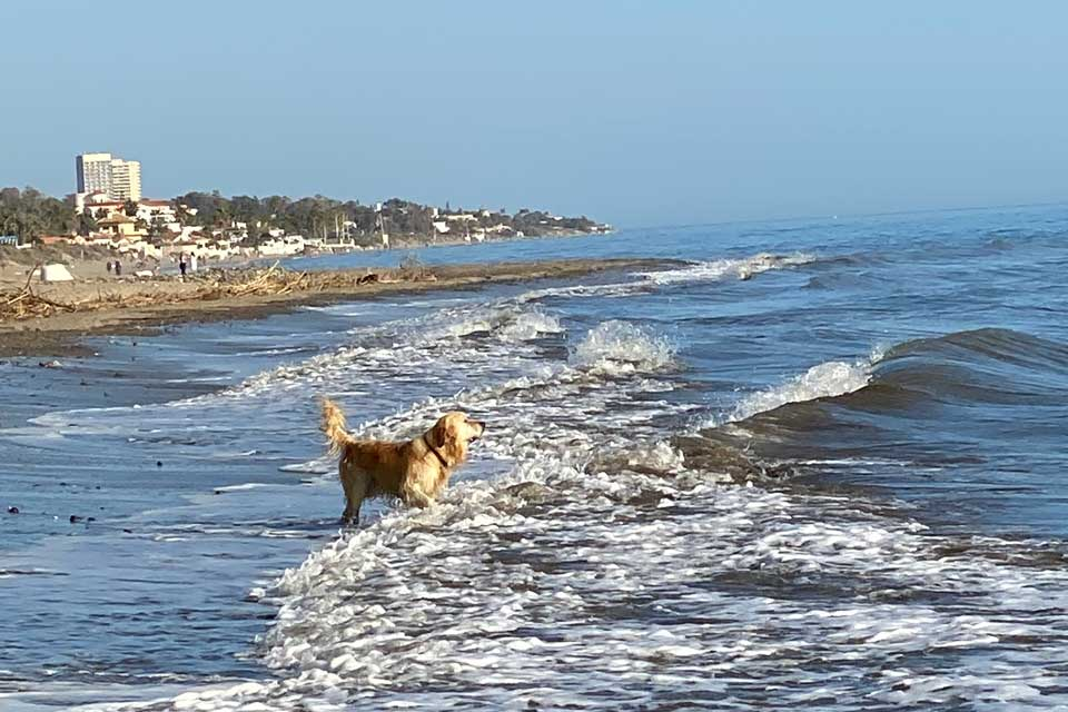Canine capers at Marbella beach